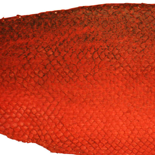 Dyed red salmon skin leather, over 50 cm